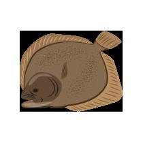 Kambala filet uzený