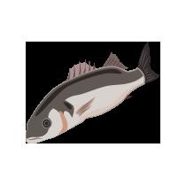 Vlk mořský filet uzený