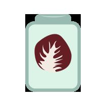 Čekanka salátová kvašená