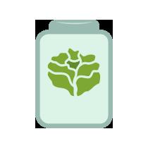 Salát listový kvašený