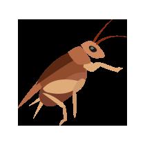 Cvrček