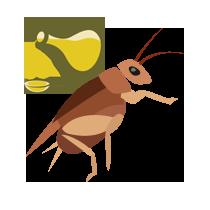 Cvrček fritovaný