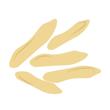 Piniový ořech