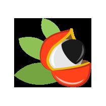 Schizandra plody čerstvé