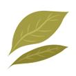 Bobkový list sušený