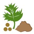 Koriandr list sušený