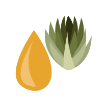 Sirup agávový