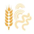 Těstoviny pšeničné
