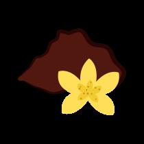 Vanilka prášek