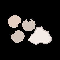 Pepř bílý