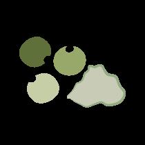 Pepř zelený