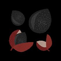 Pepř sečuánský