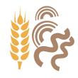 Těstoviny pšeničné celozrnné