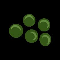 Čočka zelená neloupaná