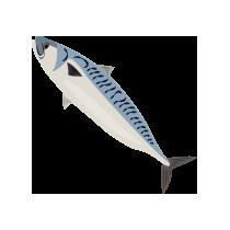 Makrela filet
