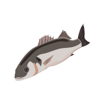 Vlk mořský filet