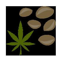 Konopná semena neloupaná