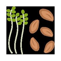 Řeřicha semínka