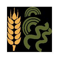 Těstoviny pšeničné se spirulinou