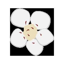 Čaj květ hlohu