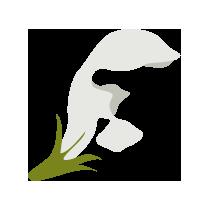 Čaj květ hluchavky