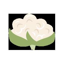 Květák