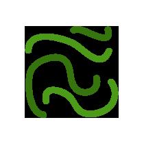 Kelp řasy čerstvé