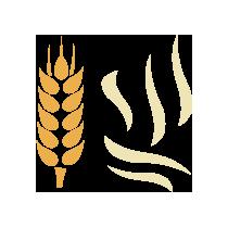 Pšenice klíčená