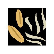 Klíčky kamutové sušené