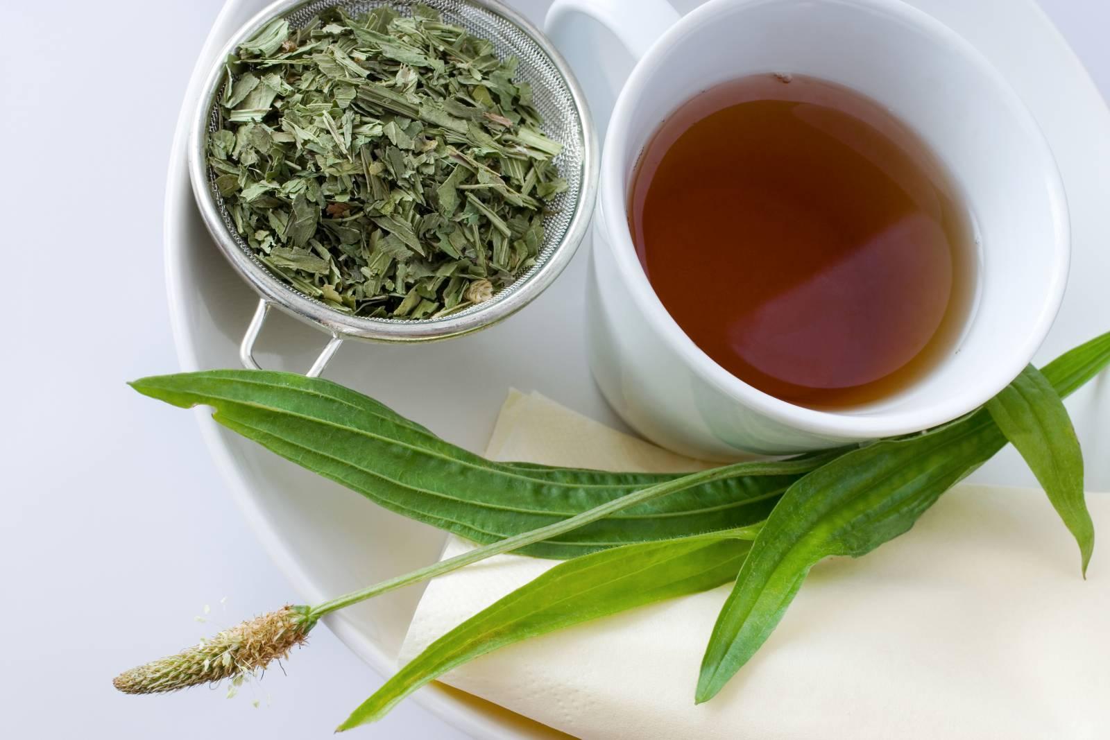 Jitrocelový čaj